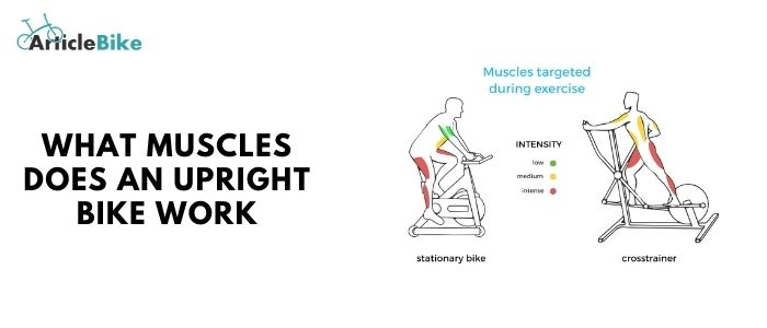 What muscles does an upright bike work
