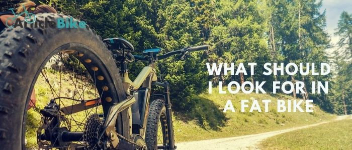 What should I look for in a fat bike
