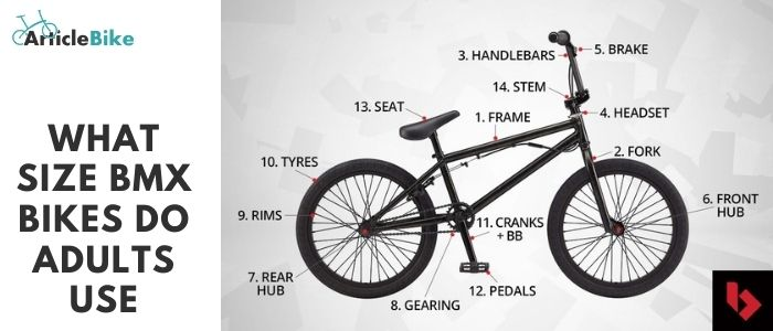 What size BMX bikes do adults use